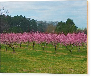 Peach Tree Grove By Jan Marvin Wood Print