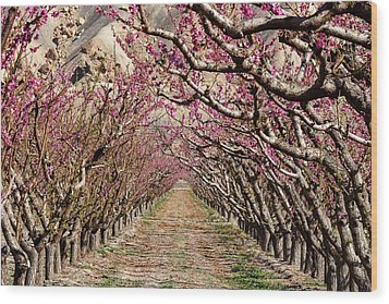 Peach Tree Tunnel Wood Print by John McArthur