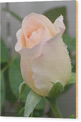 Wood Print featuring the photograph Fragile Peach Rose Bud by Belinda Lee