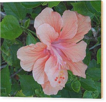 Peachy Hibiscus Wood Print