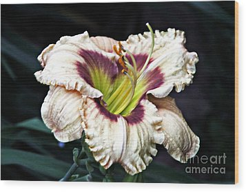 Peachy With Ruffles Lily Wood Print by Elizabeth Winter