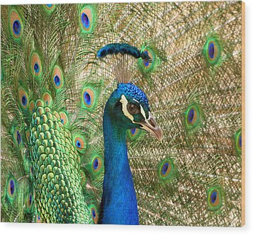 Wood Print featuring the photograph Peacock 1 by Bob and Jan Shriner
