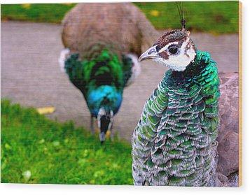 Peacock 4 Wood Print by Izabela Bienko