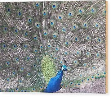 Wood Print featuring the photograph Peacock Bow by Caryl J Bohn
