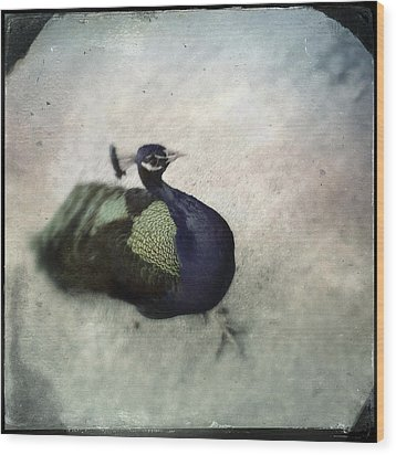 Wood Print featuring the photograph Peacock by Bradley R Youngberg