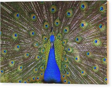 Peacock Extraordinaire  Wood Print by DerekTXFactor Creative