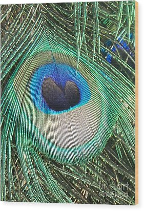 Peacock Feather Wood Print by Eric  Schiabor