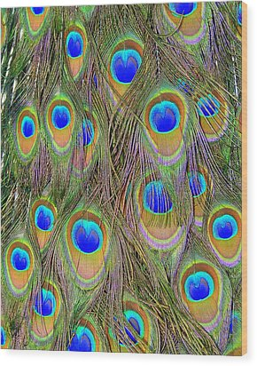 Wood Print featuring the photograph Peacock Feathers by Ramona Johnston