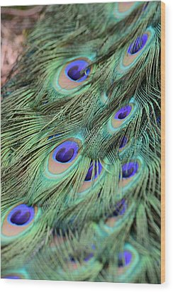 Peacock Feathers Wood Print by T C Brown