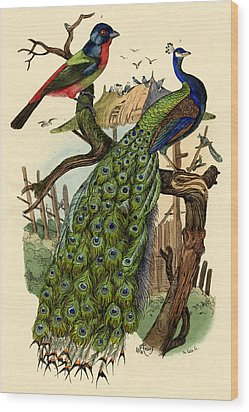 Peacock Wood Print by French School