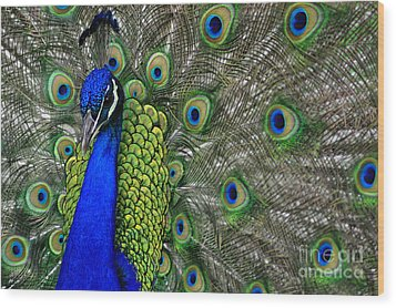 Wood Print featuring the photograph Peacock Head by Debby Pueschel