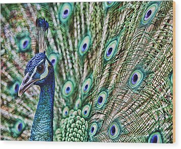 Peacock Wood Print by Karen Walzer