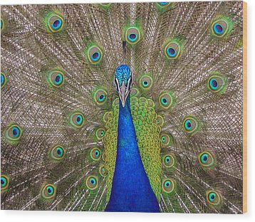 Wood Print featuring the photograph Peacock by Leigh Anne Meeks