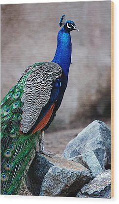 Peacock - National Bird Of India Wood Print by Photography  By Sai