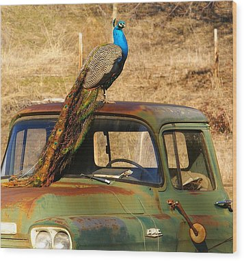 Peacock On Old Gmc Truck 3 Wood Print by Loni Collins