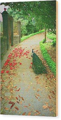 Peacock Path A Wood Print by Dulce Levitz