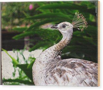 Peacock Portrait Wood Print by Ella Kaye Dickey