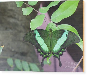 Wood Print featuring the photograph Peacock Swallowtail by Lingfai Leung