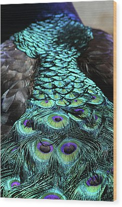 Peacock Trail Wood Print