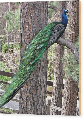 Wood Print featuring the photograph Peacock Watches The World by Diane Alexander