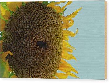 Peak A Boo Sunflower Wood Print