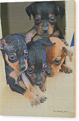 Peanuts Puppies 4 Of 5 Wood Print by Tom Janca