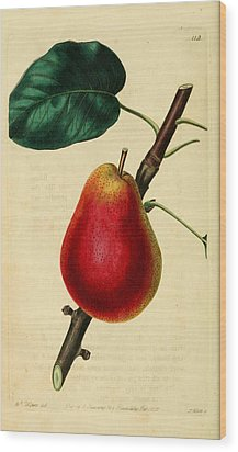 Pear 1829 Wood Print by Philip Ralley