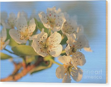 Wood Print featuring the photograph Pear Blossom 3 by Rebeka Dove