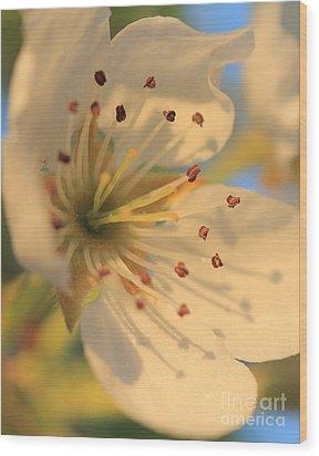 Pear Blossom Wood Print by Rebeka Dove
