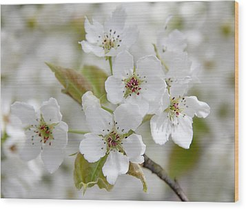 Pear Tree White Flower Blossoms Wood Print by Jennie Marie Schell