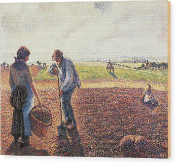 Peasants In The Field Eragny Wood Print by Camille Pissarro