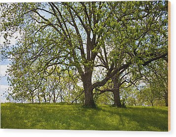 Pecan Grove Wood Print by Mark Weaver