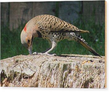 Pecking Flicker Wood Print by Lori Pessin Lafargue
