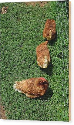 Pecking Order Wood Print