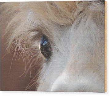 Peek A Boo Alpaca Wood Print