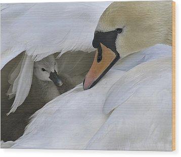 Peek-a-boo Wood Print by Inge Riis McDonald