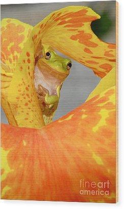Peek A Boo Wood Print by Kathy Gibbons