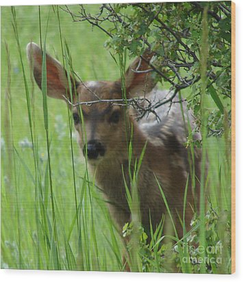 Playing Peek A Boo In Evergreen Colorado Wood Print