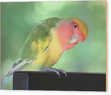 Peeking Peach Face Lovebird Wood Print by Andrea Lazar