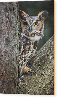 Peering Out Wood Print by Dale Kincaid
