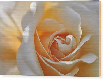 Wood Print featuring the photograph Pegasus Rose  by Sabine Edrissi