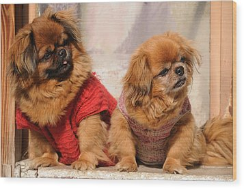 Pekingese Pair Wood Print