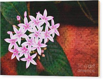 Pelargonium Graveolens II Wood Print by Floyd Menezes