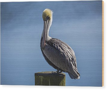 Pelican 02 Wood Print