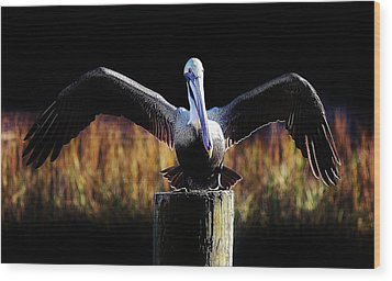 Pelican All Aglow Wood Print by Paulette Thomas