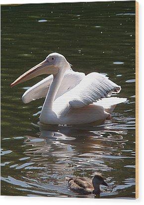 Pelican And Friend Wood Print