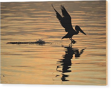 Pelican At Sunrise Wood Print by Leticia Latocki