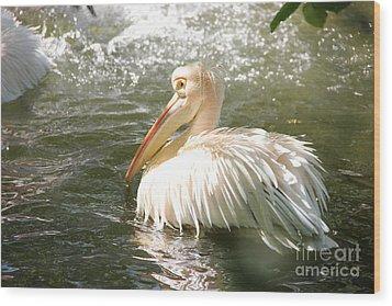Pelican Bath Time Wood Print