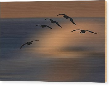 Pelican Blur  73a2324 Wood Print by David Orias