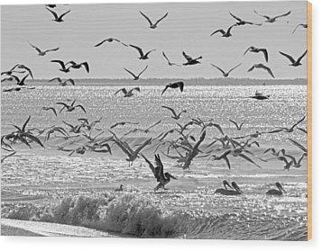 Pelican Chaos Wood Print by Betsy Knapp